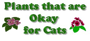 Plants that are Okay for Cats