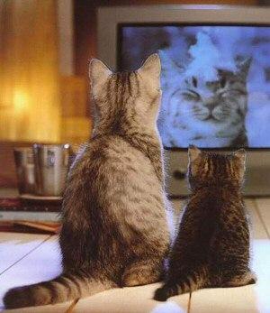cat's lovers