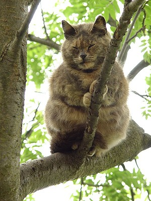 Catstuff Funny Cat Photos